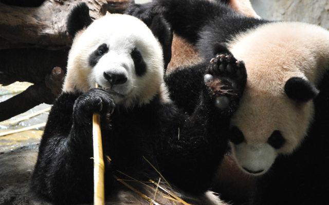 Mise à jour du filtre Google Panda